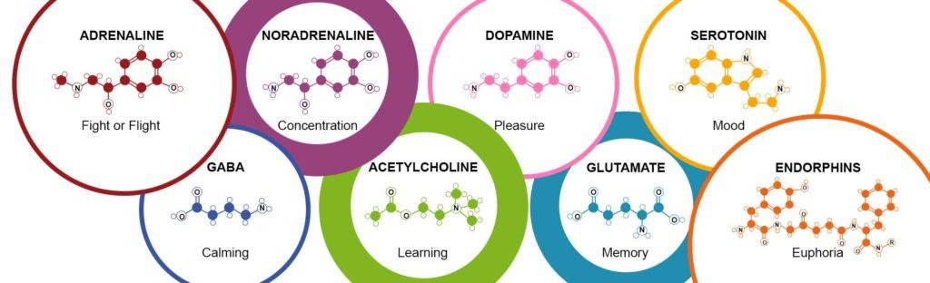neurotransmitters-nootropic.supplements