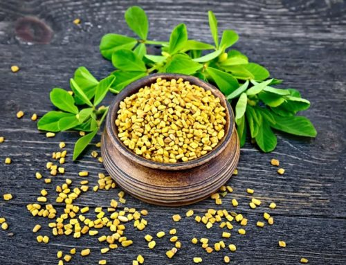 Fenugreek | Action – Benefits – Side Effects – Dietary Supplements
