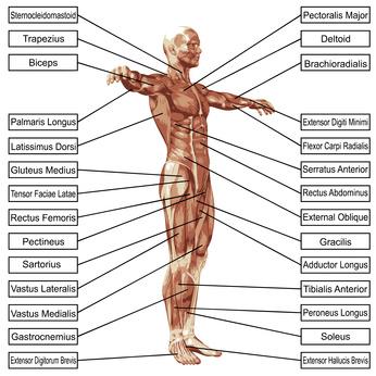 l-carnitin-main.health.benefits