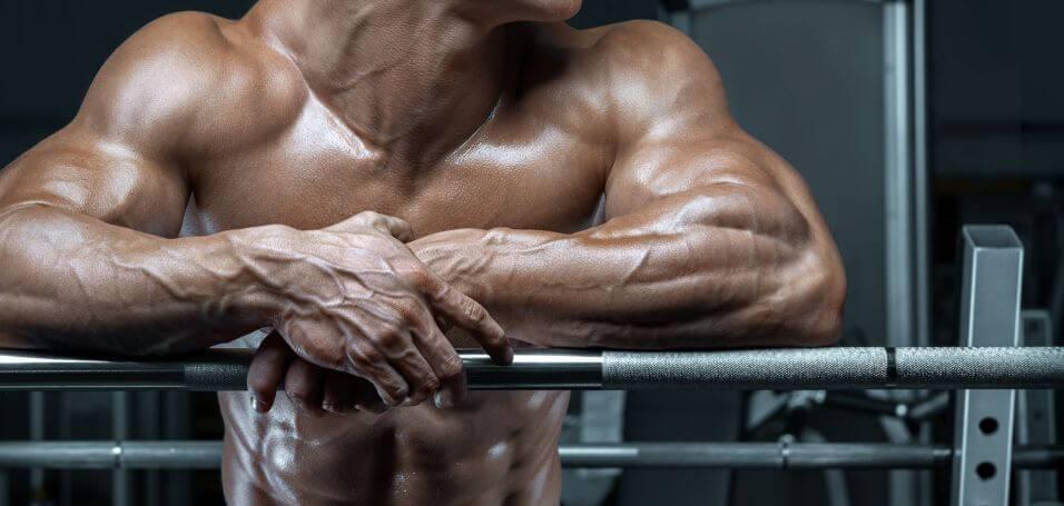 muscular-hypertrophy
